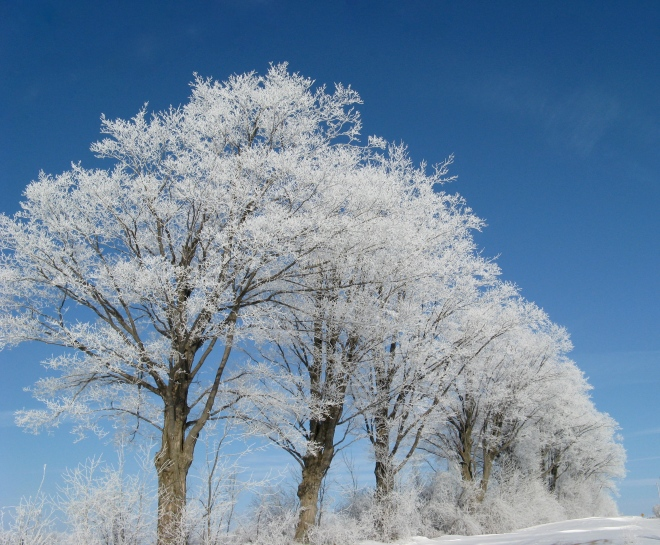 Trees with Hoar Frost(1)